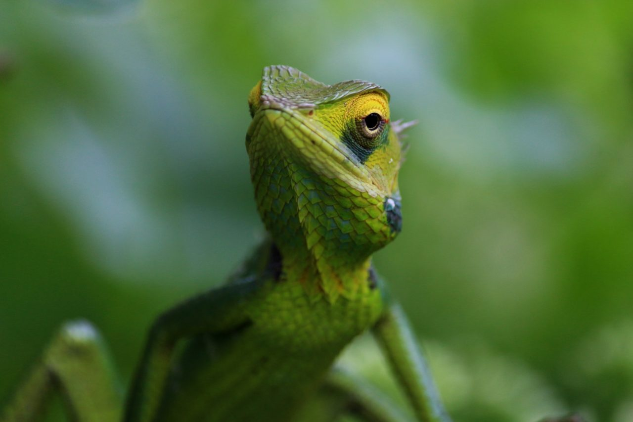 Chameleon – Most Beautiful Picture