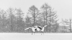 Dancing in the snow – Most Beautiful Picture