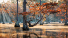 Morning in the swamp – Most Beautiful Picture