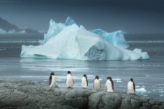 Penguins and iceberg in Antarctica