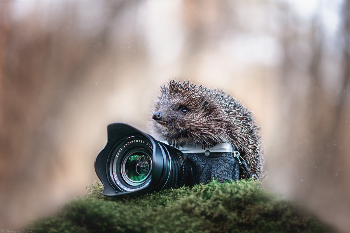 Hedgehog taking some pictures