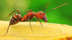 Ant – Most Beautiful Picture