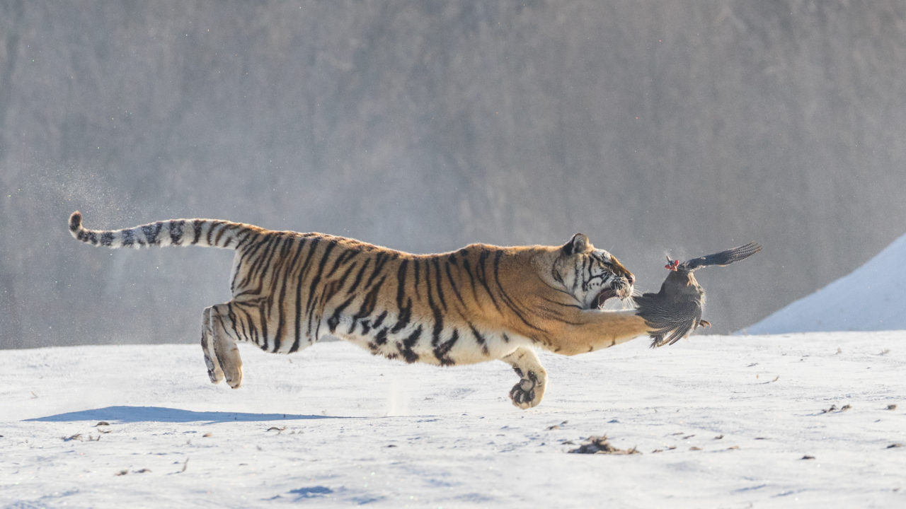 Hunting in the air – Most Beautiful Picture