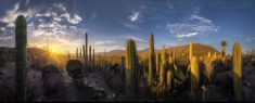 Last Sunrays in the Mexican Desert