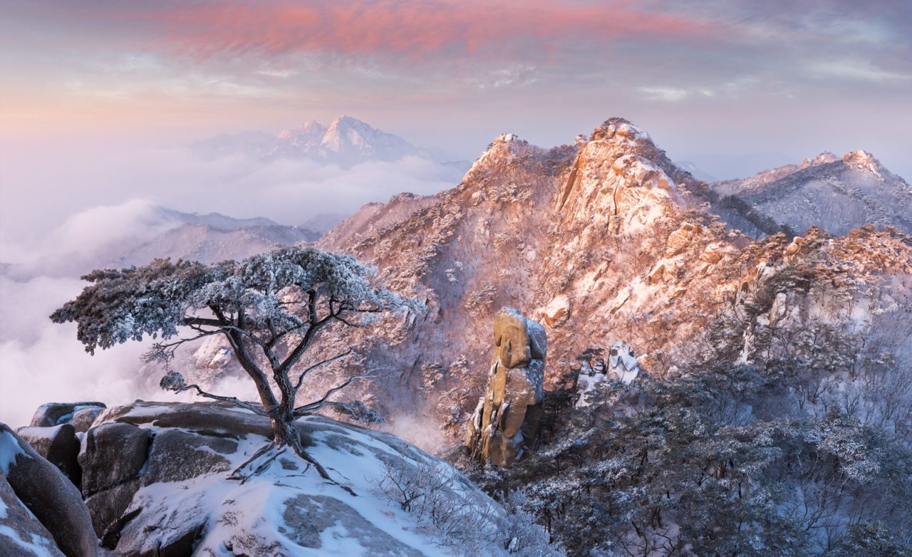 Pine Tree of Dobongsan, South Korea – Most Beautiful Picture