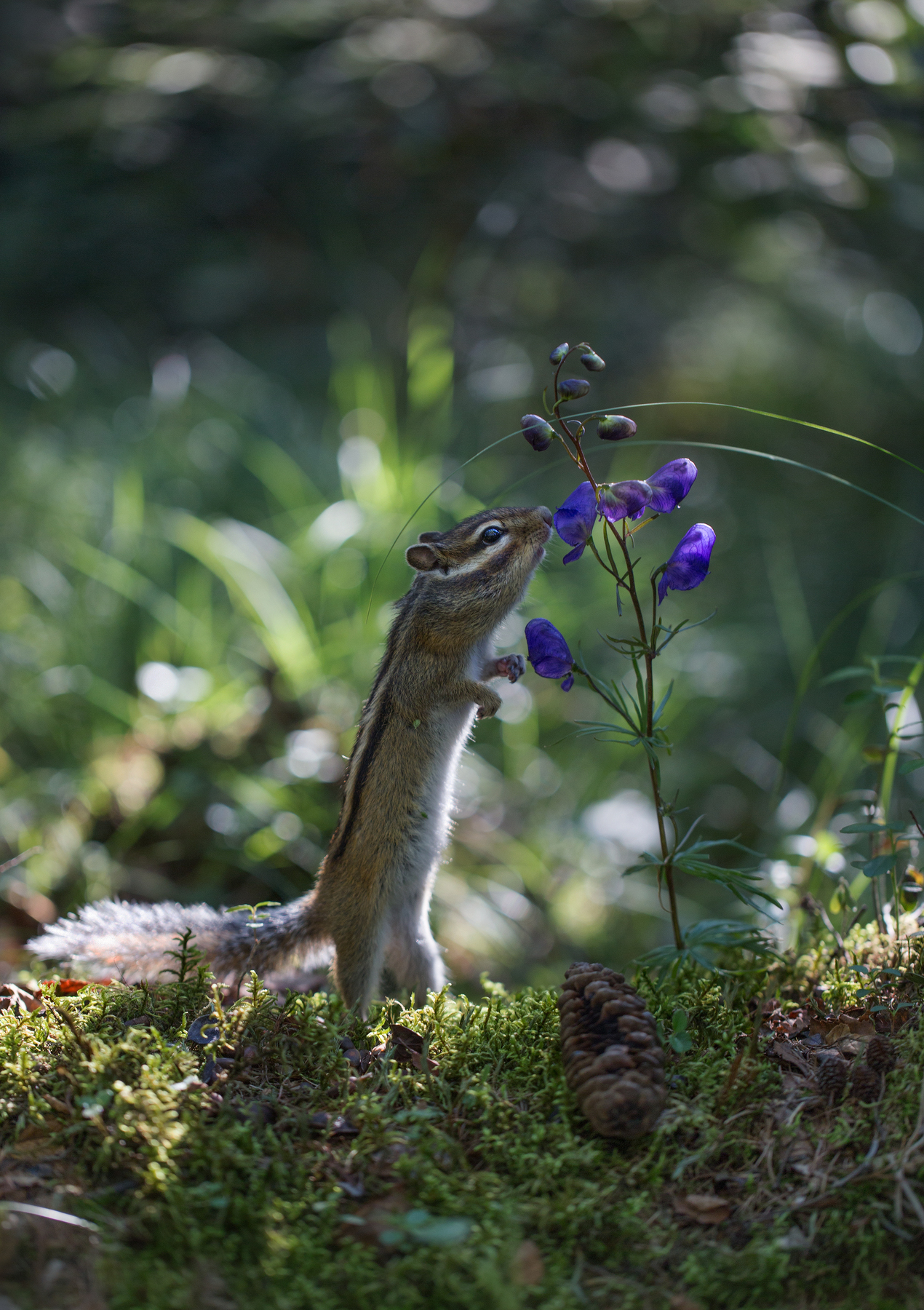 Romantic squirrel – Most Beautiful Picture