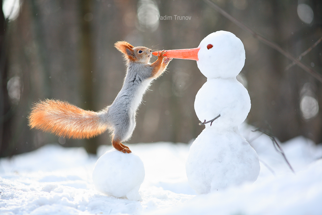 The squirrel and the snowman – Most Beautiful Picture