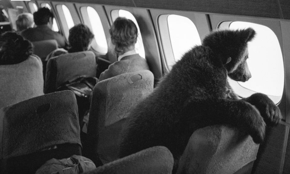 Baby bear Dasha on the way to Prague – Most Beautiful Picture