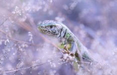 Lizard – Most Beautiful Picture
