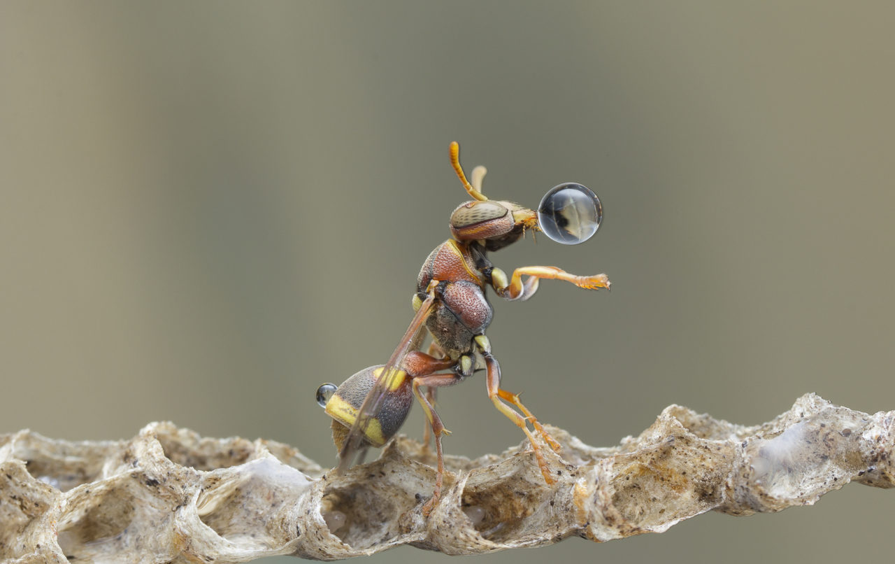 Wasp Blowing Water Bubble – Most Beautiful Picture