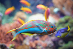 Colored fish