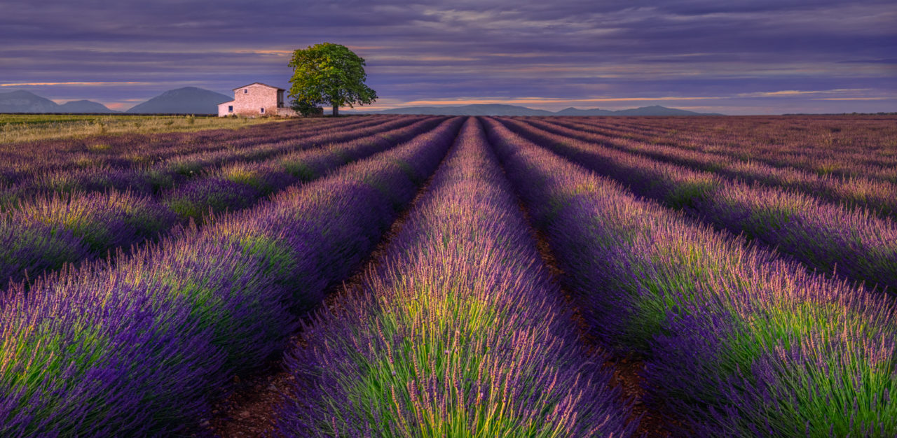 Lavender evening – Most Beautiful Picture