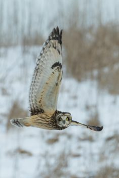 Owl – Most Beautiful Picture