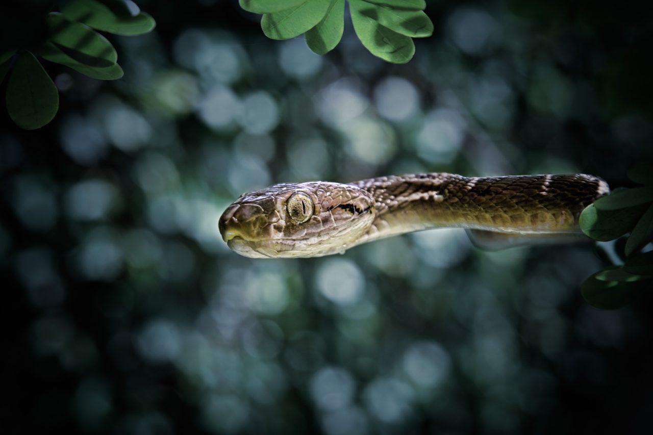 Snake, Bali – Most Beautiful Picture