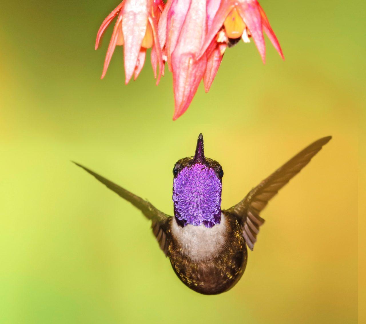 Tandayapa Bird Lodge, Ecuador – Most Beautiful Picture