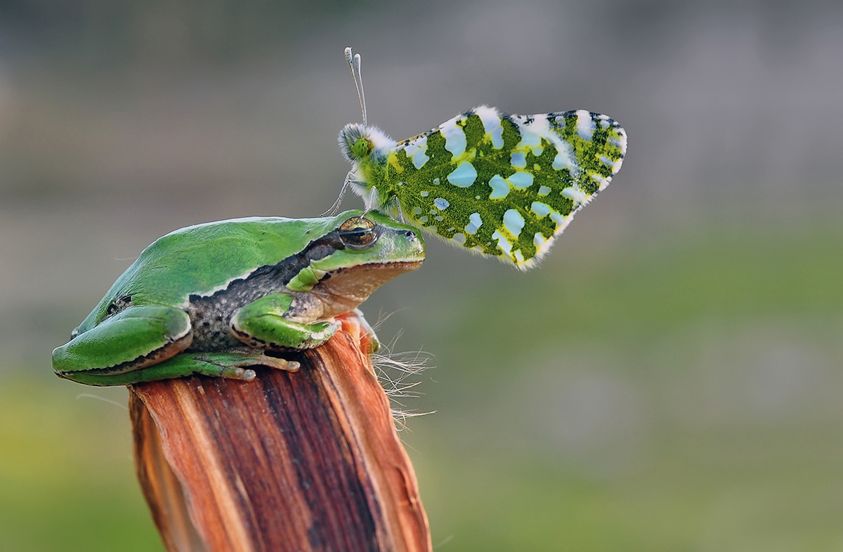 Butterfly and toad