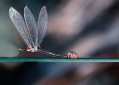 Dragonfly and spider