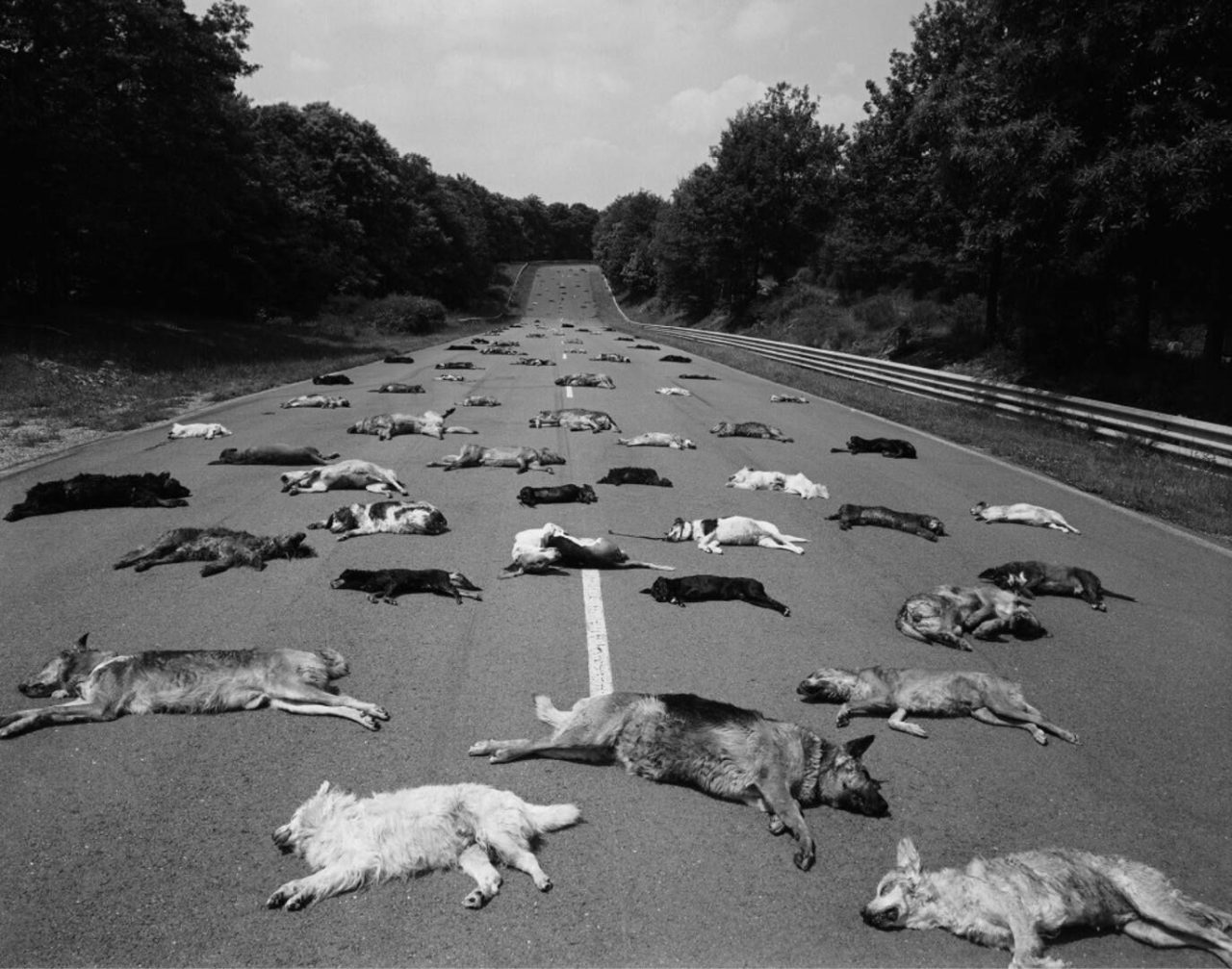 Abandoned dogs on the summer road, France – Most Beautiful Picture