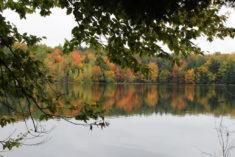 Automne sur le lac, Québec – Brut de Pomme