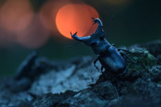 Beetle – Most Beautiful Picture