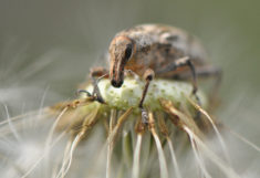 Insect in close-up