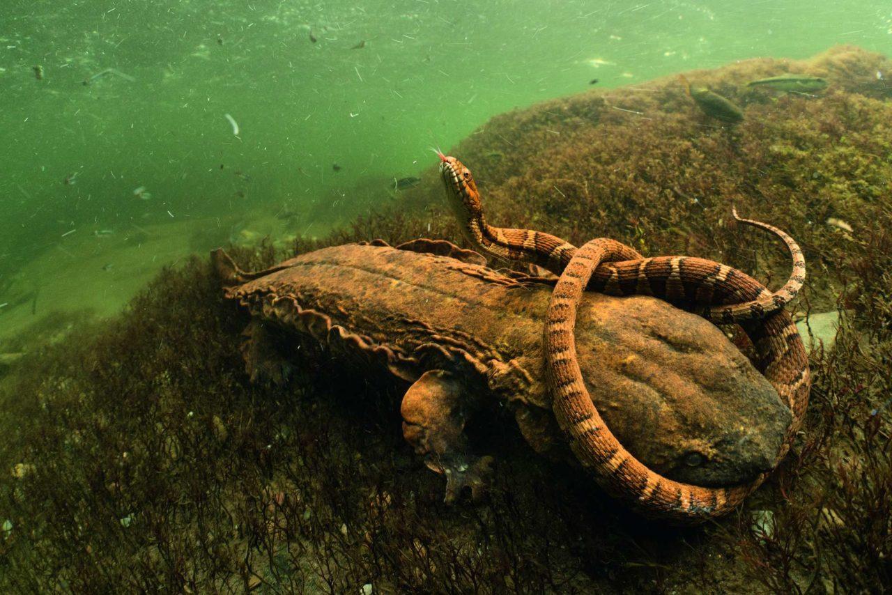 Combat underwater – Most Beautiful Picture
