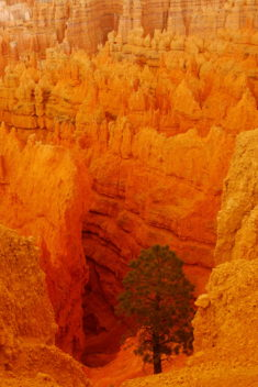 Hoodoos, Bryce Canyon – Most Beautiful Picture