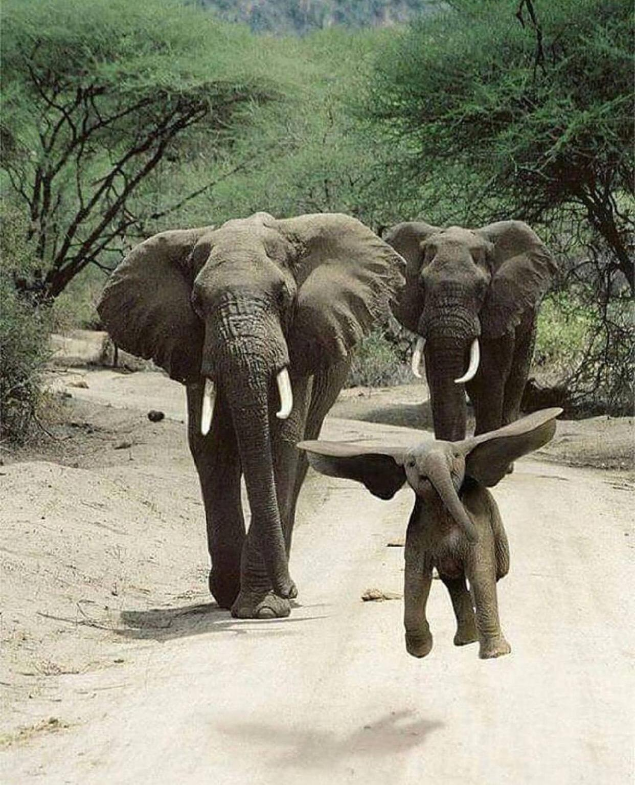 Jumping Elephant – Most Beautiful Picture