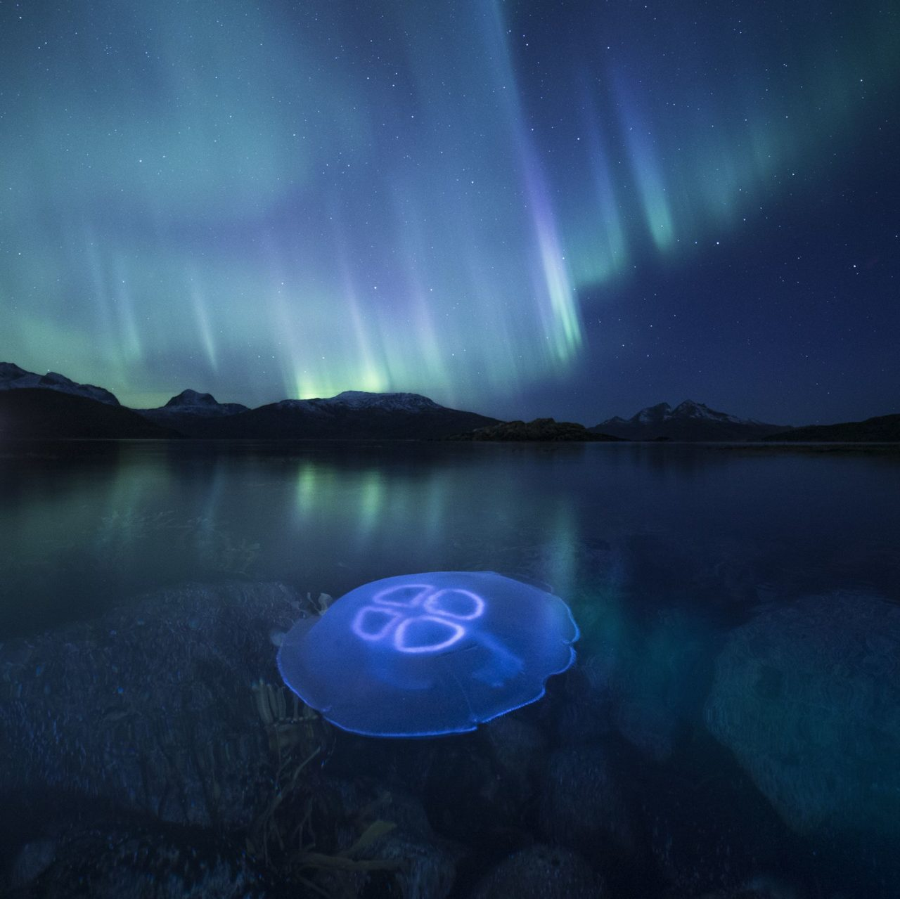 Jellyfish under Aurora – Most Beautiful Picture