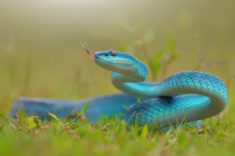 Blue snake – Most Beautiful Picture