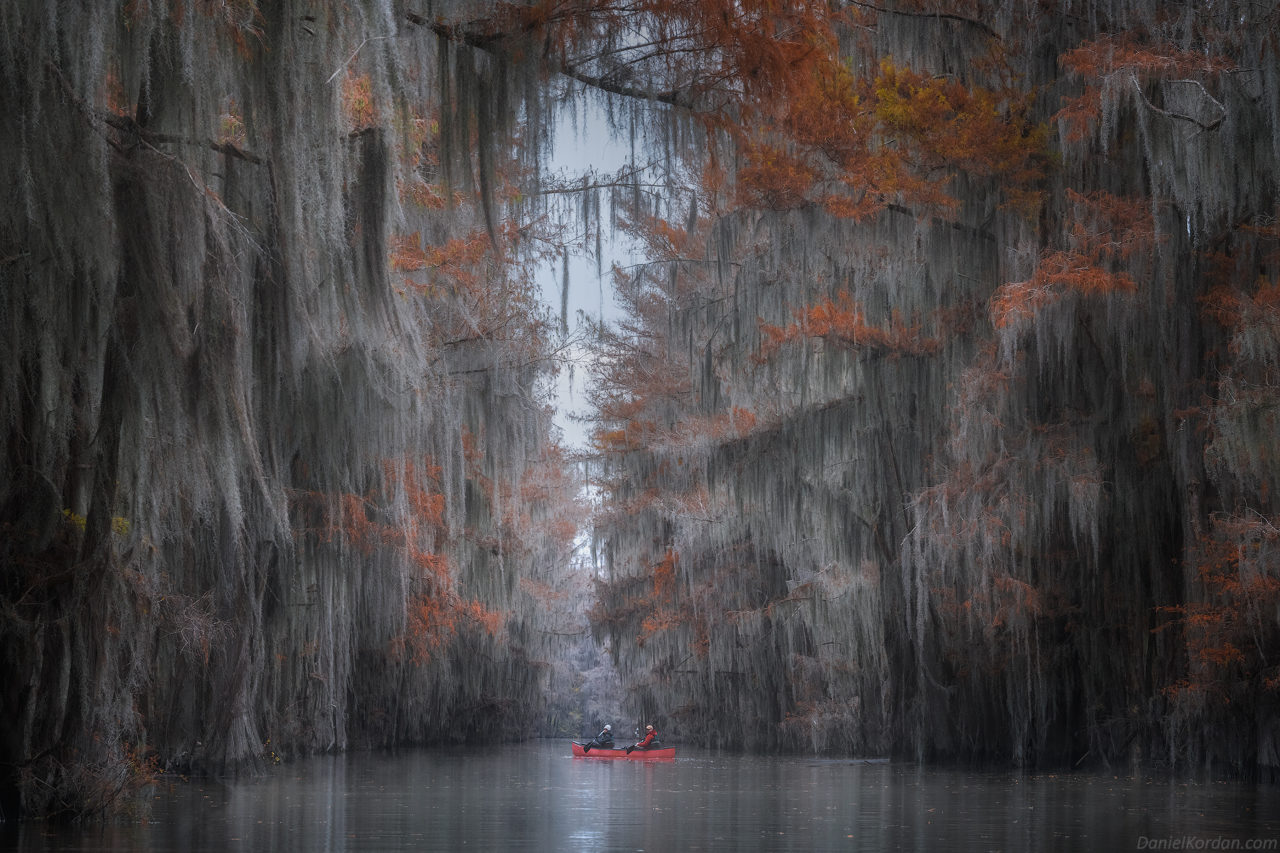 Cypress Swamps – Most Beautiful Picture