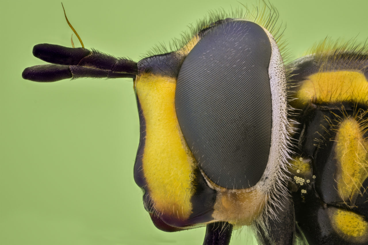 Insect head close-up