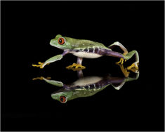 Frog – Most Beautiful Picture