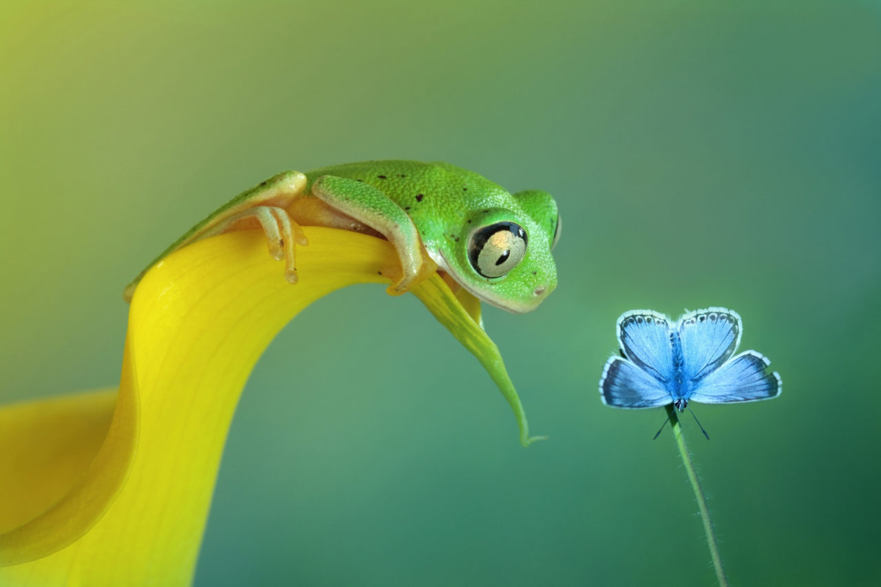 Green frog watches blue butterfly – Most Beautiful Picture