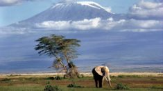 Elephant, Kilimanjaro – Most Beautiful Picture
