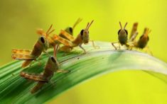 Grasshoppers children – Most Beautiful Picture