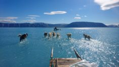 Greenland, June 2019 – Most Beautiful Picture