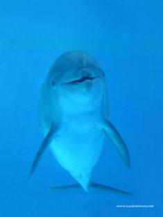 Le Canada va interdire la captivité des baleines et des dauphins – Les Baleines