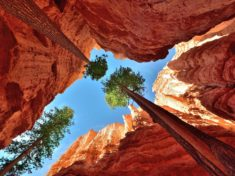 Trees, Bryce Canyon, Utah – Most Beautiful Picture