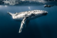 Whale – Most Beautiful Picture