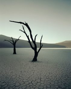 Dead Vlei dead trees, Sossusvlei, Namibia – Most Beautiful Picture