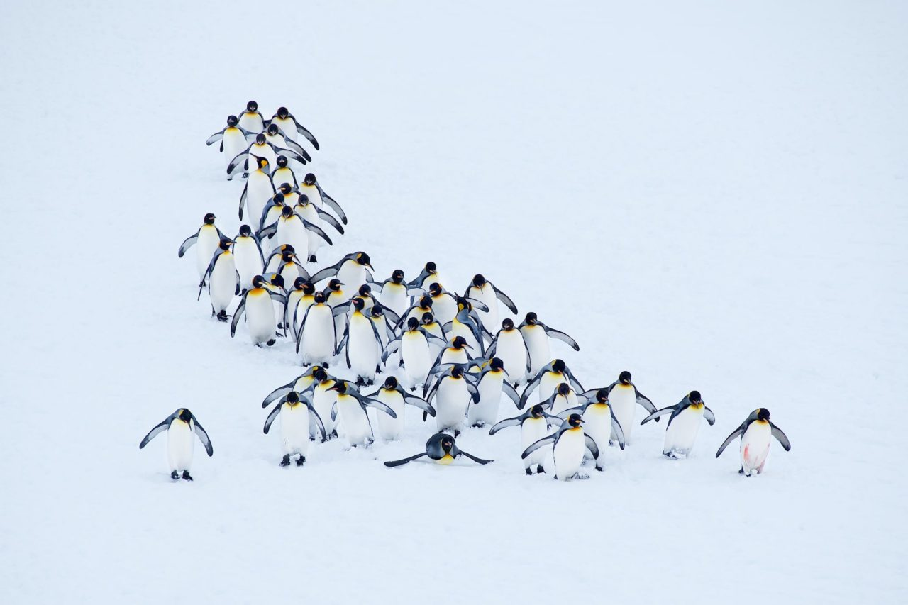 Penguins – Most Beautiful Picture