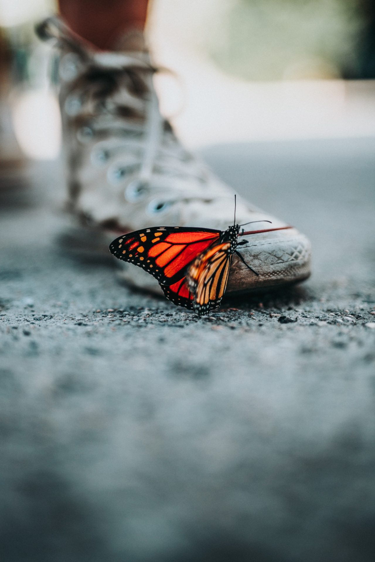 Butterfly – Most Beautiful Picture