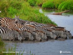 Zebras, Serengeti National Park, Tanzania – Most Beautiful Picture