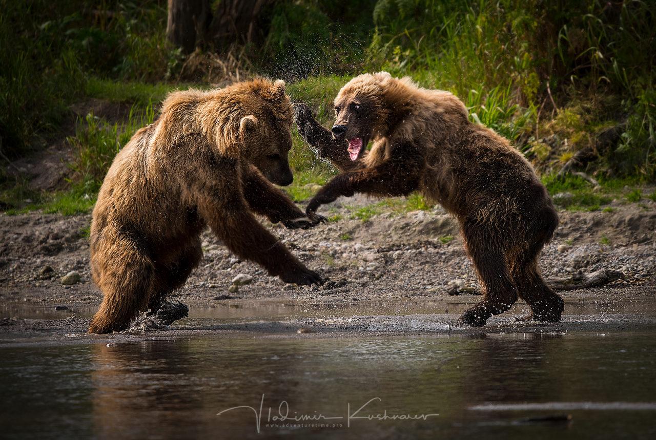 Bear's Clash