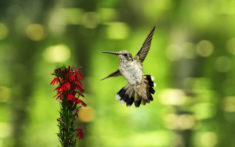 Hummingbird and flower – Most Beautiful Picture
