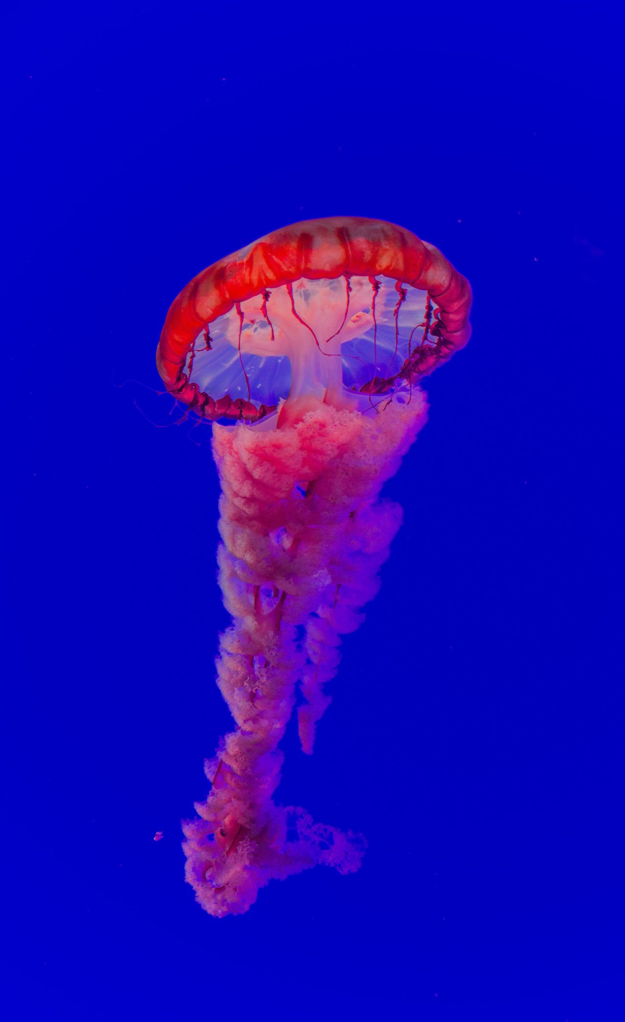 Jellyfish – Most Beautiful Picture