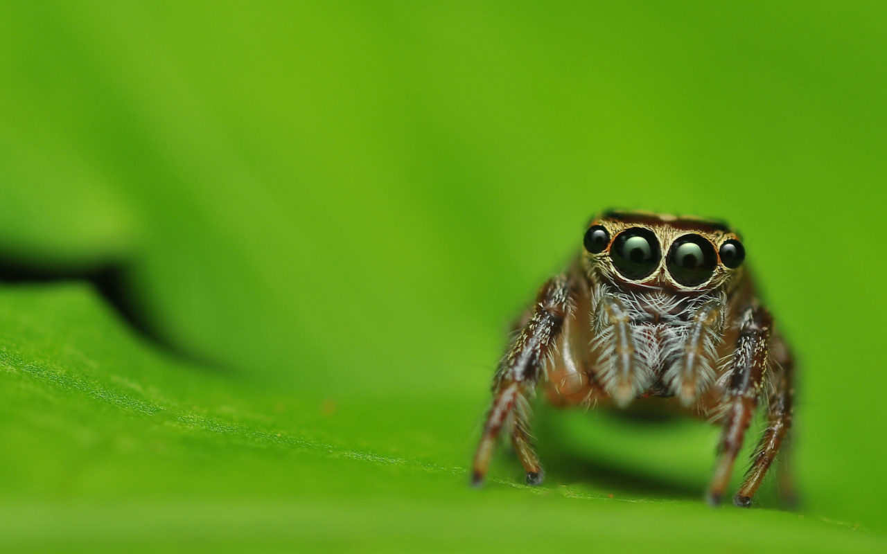 Multiple gaze of spider – Most Beautiful Picture