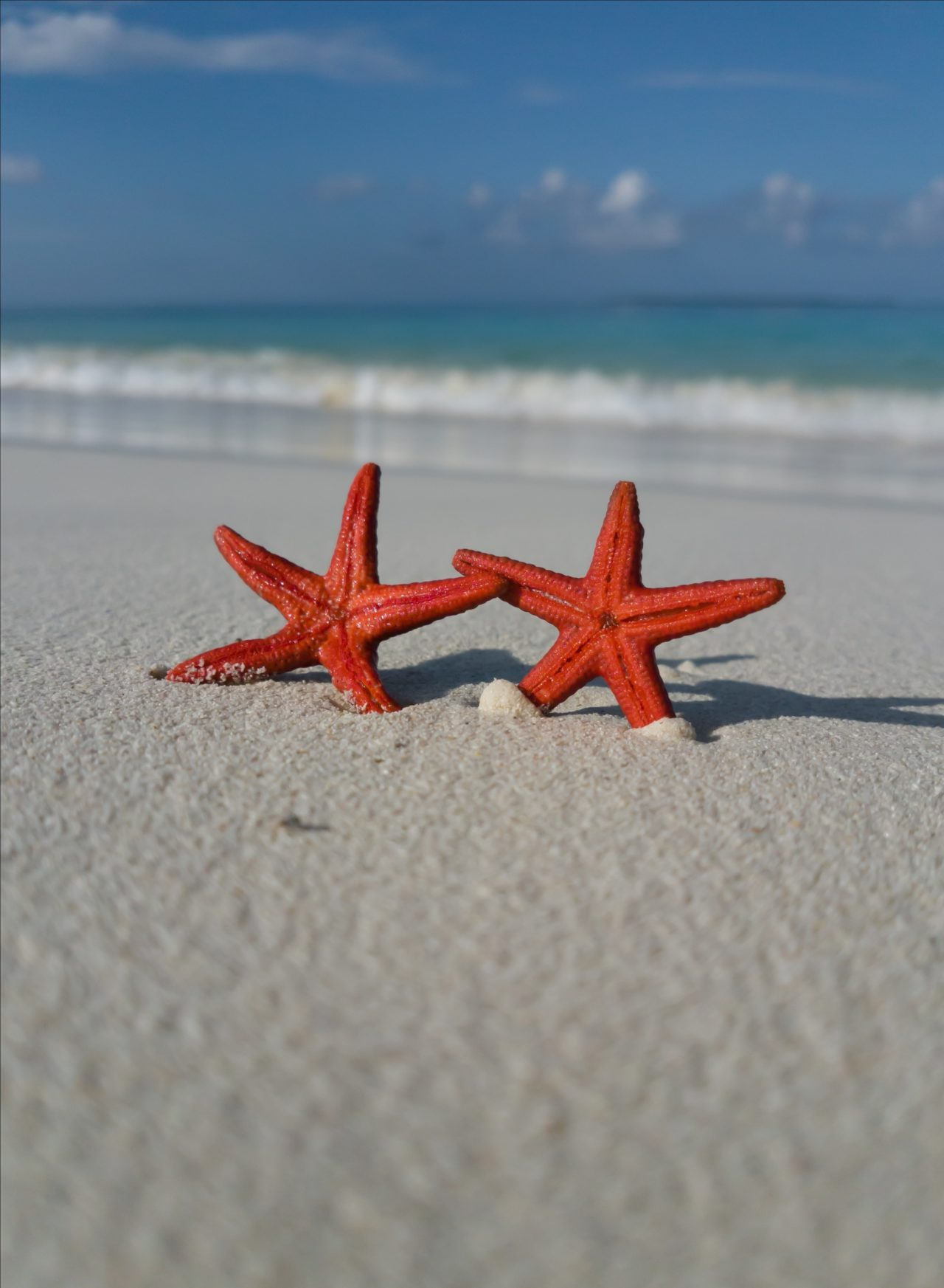 Starfish – Most Beautiful Picture