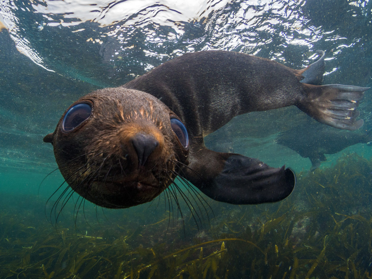 Fur seal – Most Beautiful Picture